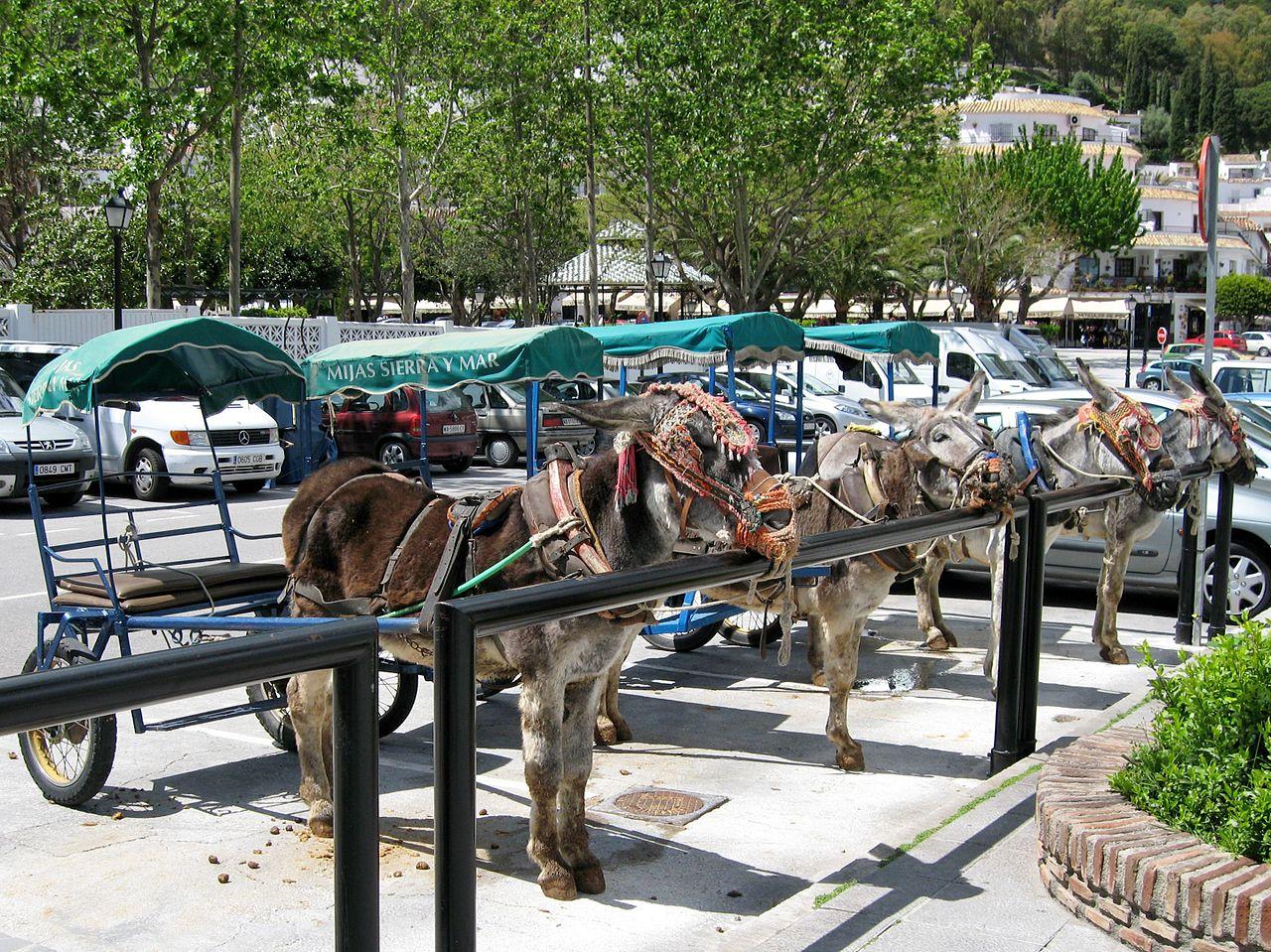 Los burro-taxis