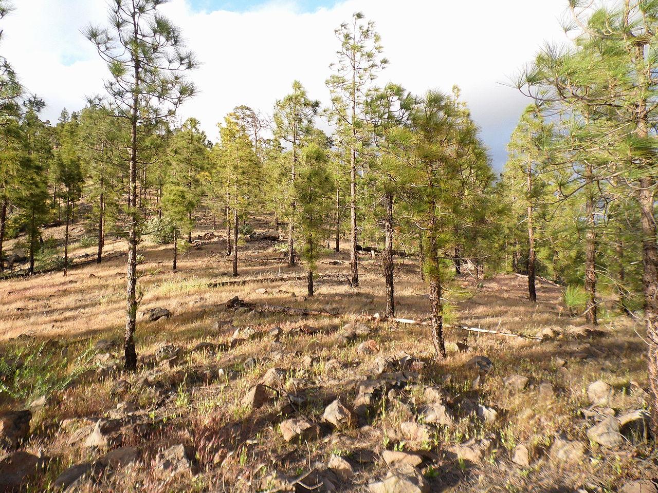 La Reserva de Inagua